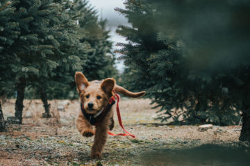 Brown dog running through trees